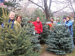 Find the perfect tree at Country Pine Farm